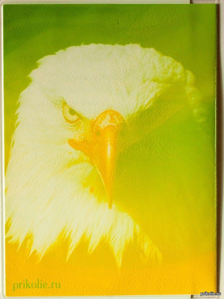 Обложка на паспорт ФК Анжи, паспорт с эмблемой ФК Анжи, обложка Анжи, эмблема Анжи на паспорте, паспорт Анжи, купить обложку на паспорт Анжи, обложка на документы с эмблемой Анжи, футбольный сувенир Анжи, паспорт болельщика Анжи
